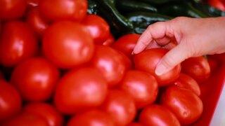 wptv-tomatoes-.jpg