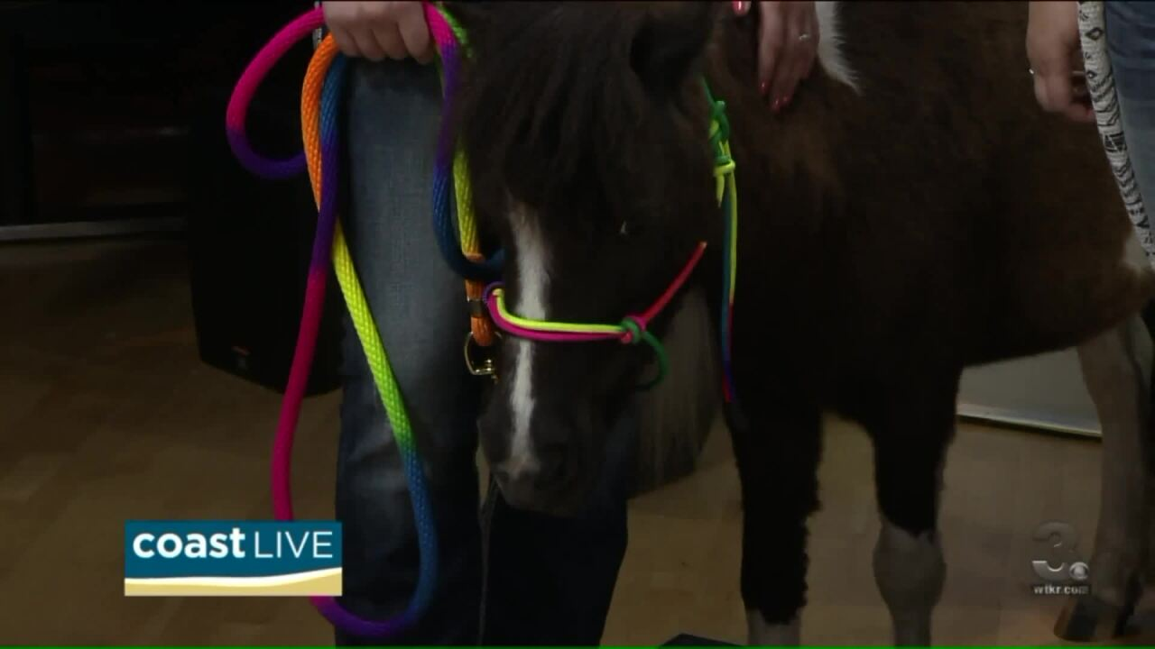 Kit Kat the miniature horse is getting ready for Summer Camp on Coast Live