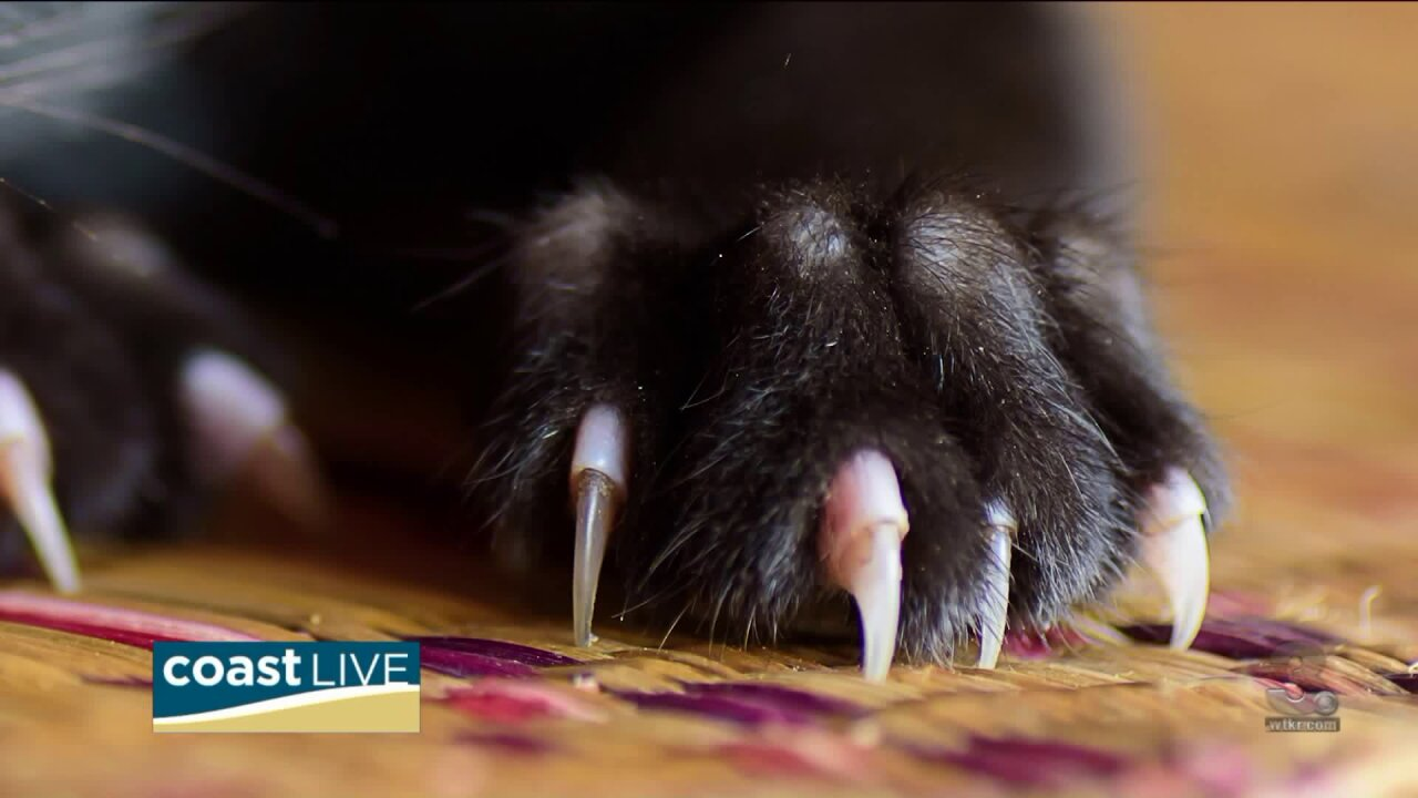 Advice for keeping cats from scratching on CoastLive