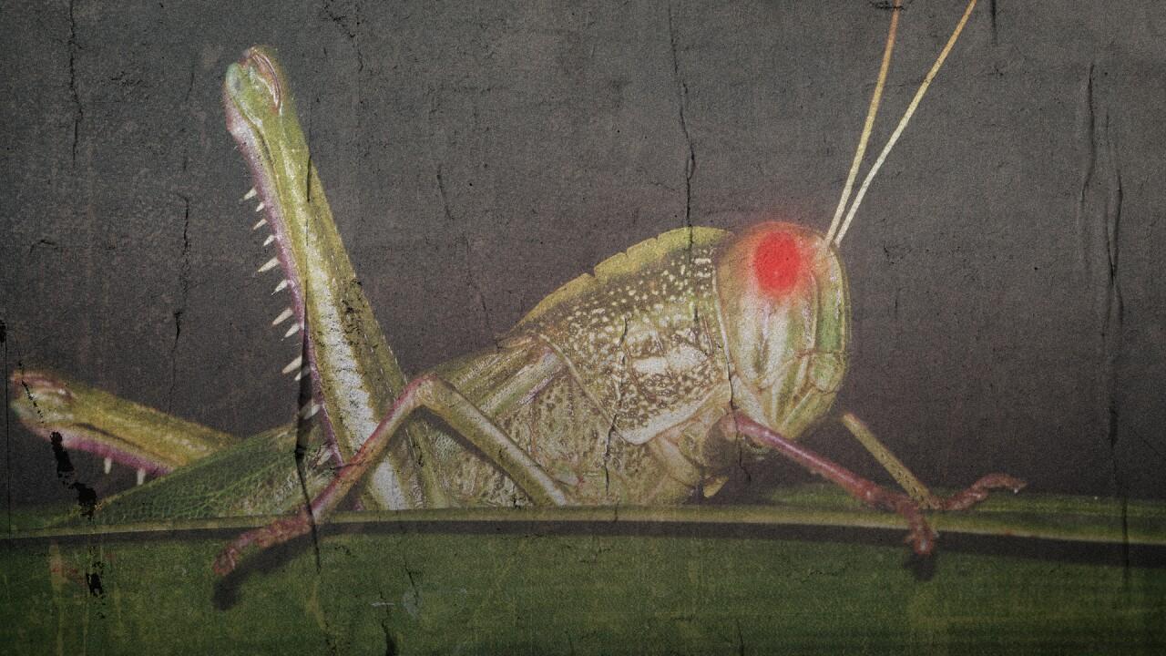 Grasshopper costume fullscreen.jpg