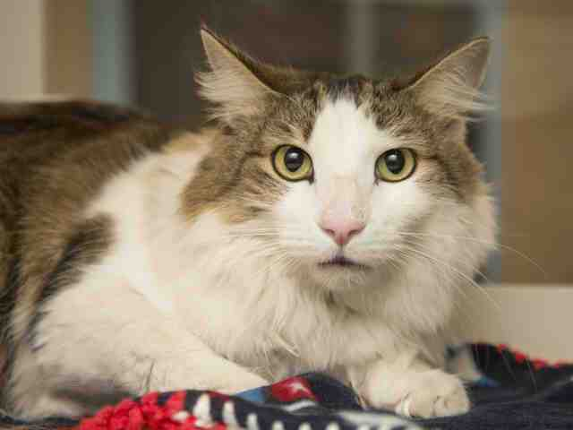 Pets up for adoption from Arizona Humane Society and Maricopa County Animal Care (2/28)
