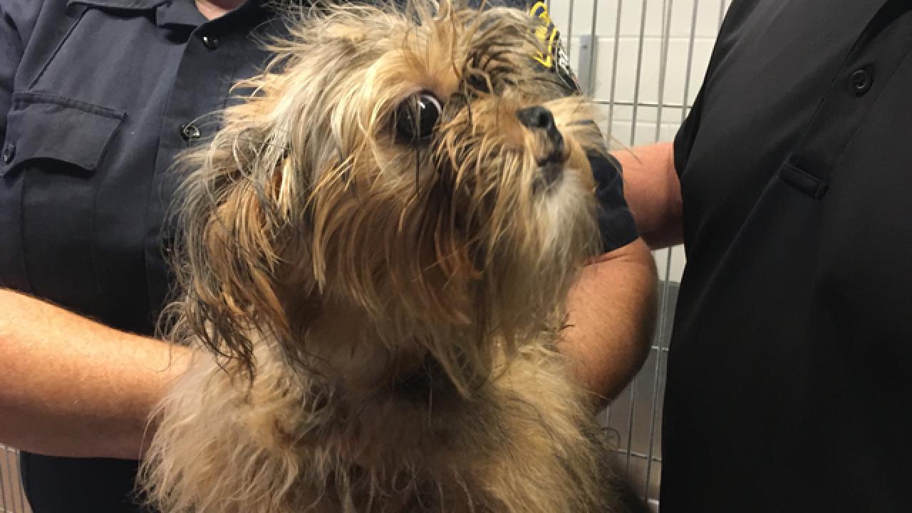 Dog abandoned in garbage bag outside shelter