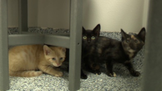 Padme, Jabba, and Darth Meow were recently found hiding under the hood of a car