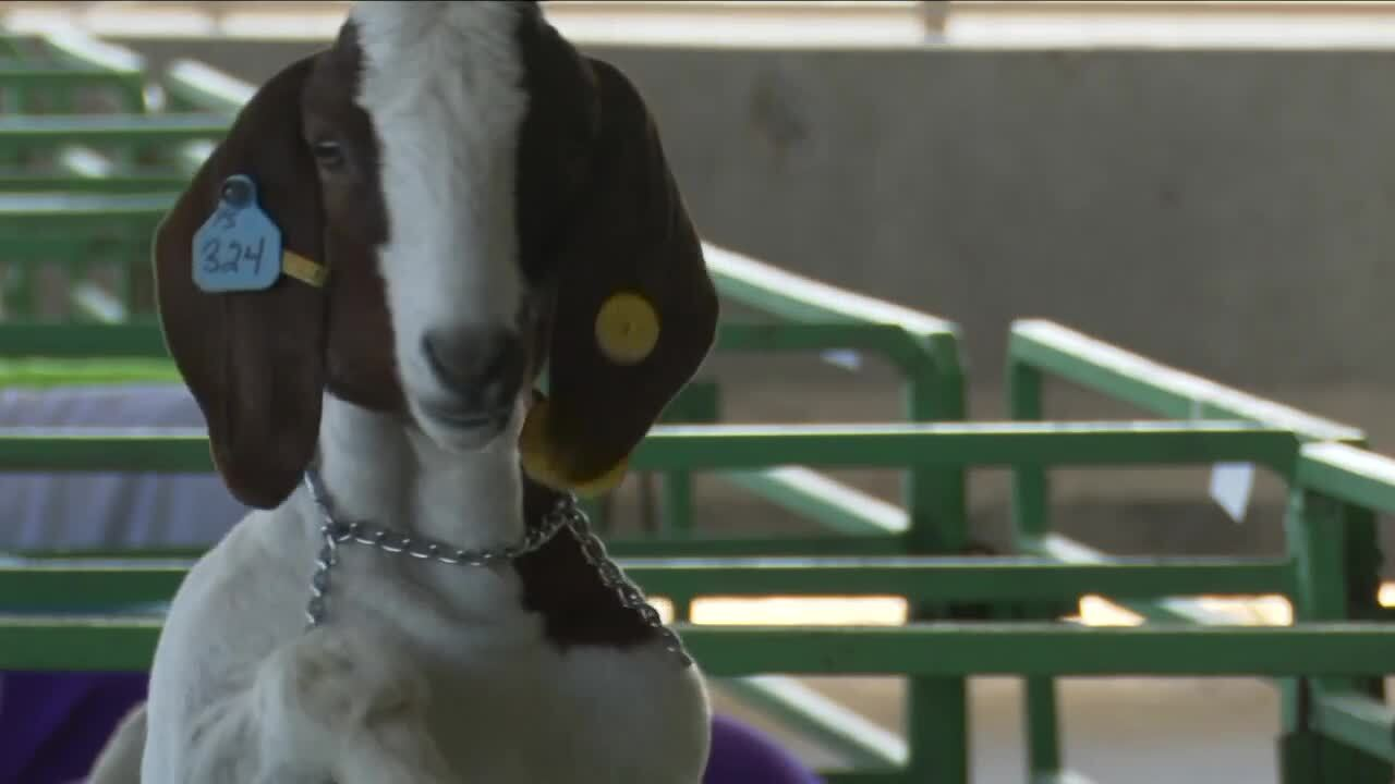 4-H sale events continued with COVID-19 precautions