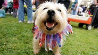 Five Tips for a Safe July 4th for Your Pet
