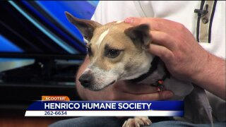 Paws for Pets – Henrico Humane Society