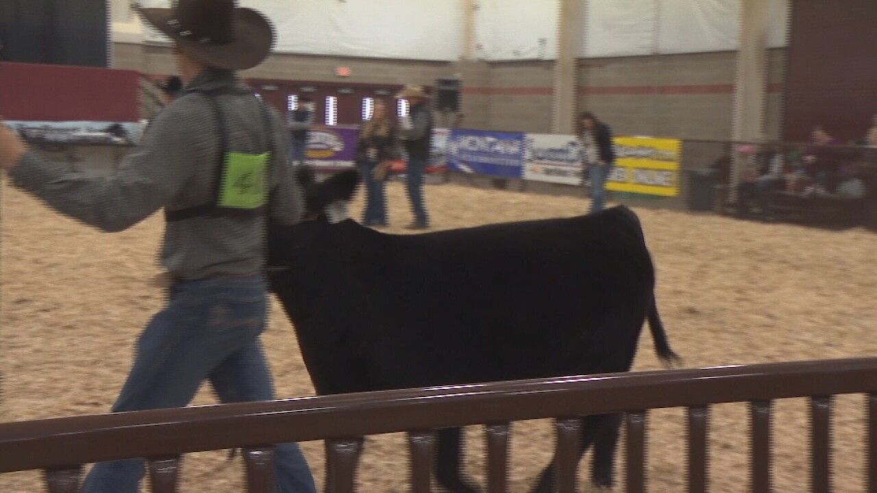 Nile Stock Show And Rodeo Kicks Off In Billings