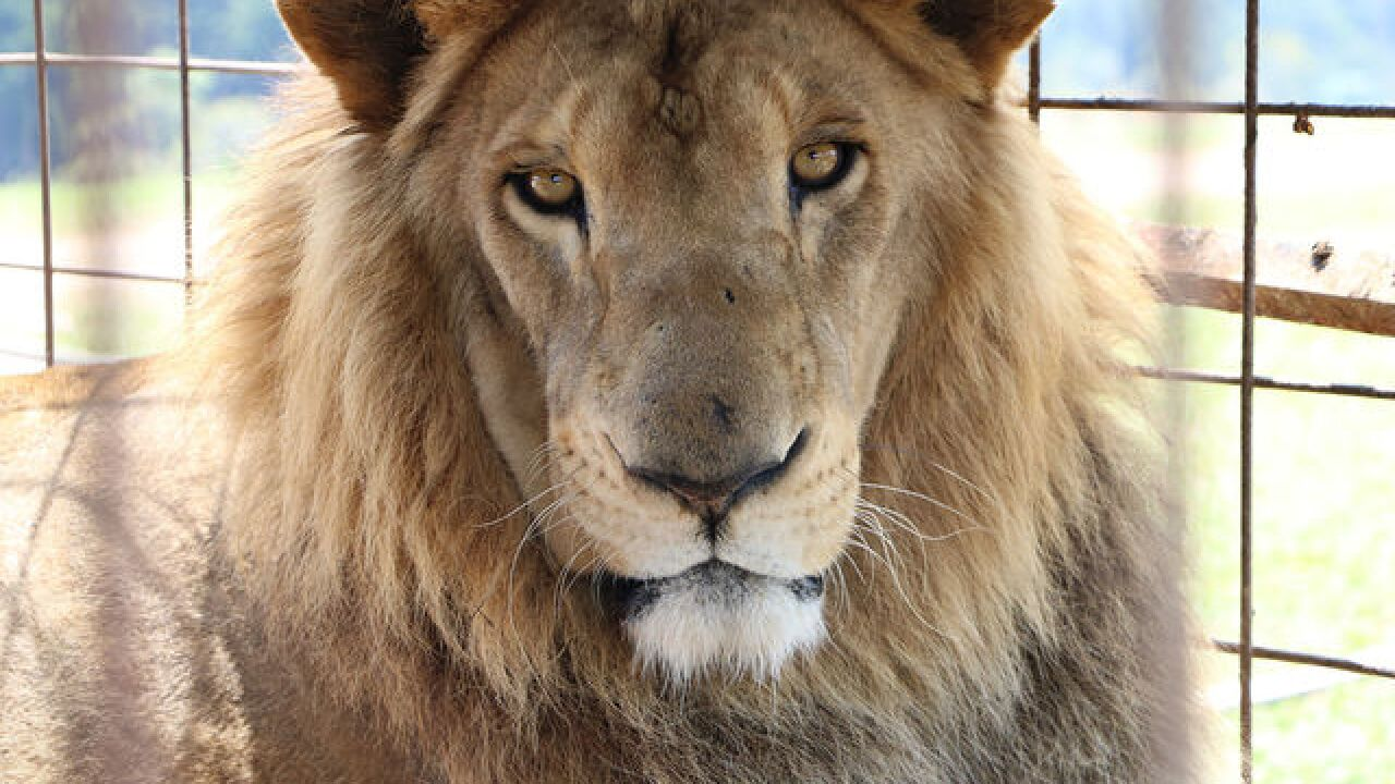Health Checks for Ex-Circus Big Cats