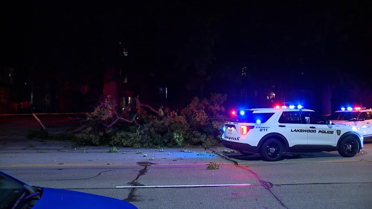 Tree on cars Lakewood 1.jpg