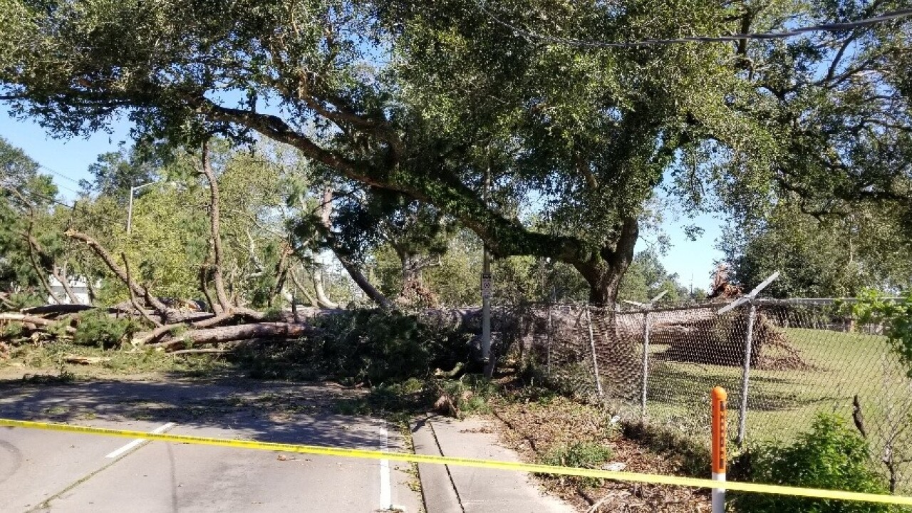 tree down lafayette parish lcg.jpg