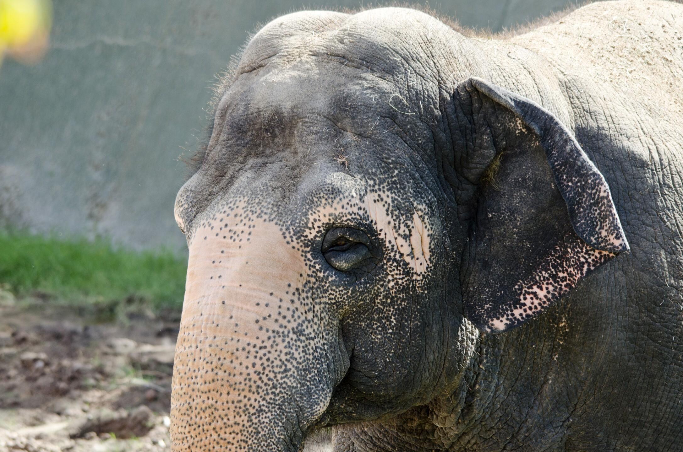 Reba Asian Elephant Phoenix Zoo - Handouts9.jpg