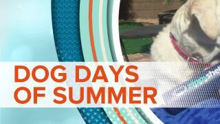 Dogs Days Of Summer Moving Tip  3 b840aa483