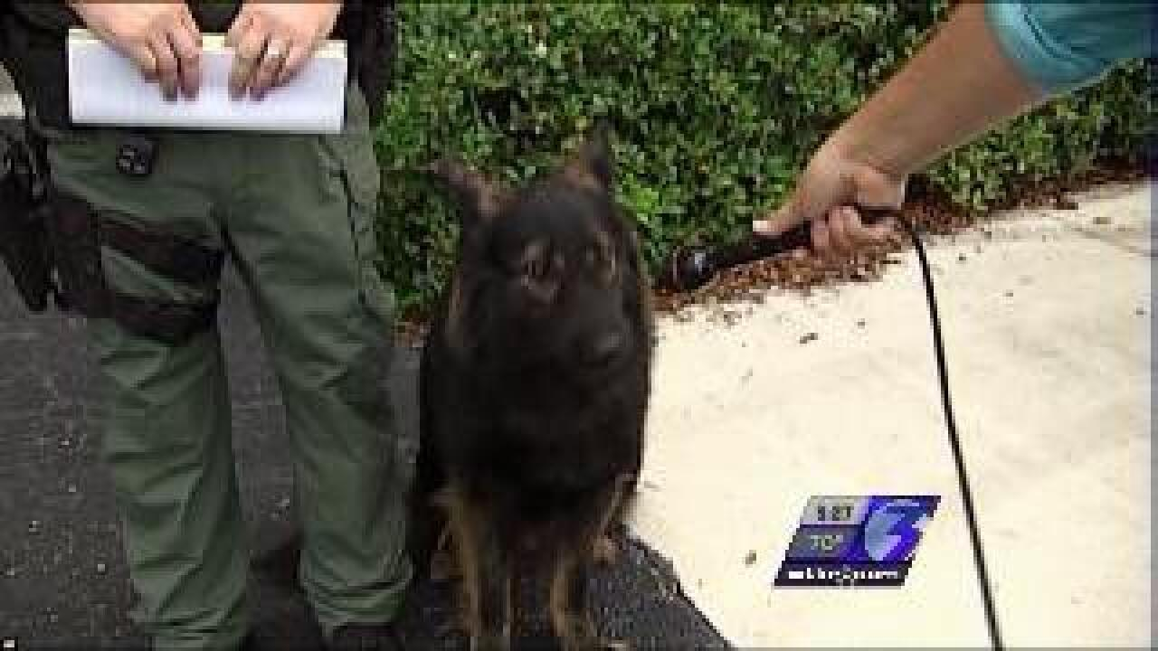 Dog called to testify in Florida traffic case
