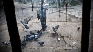 A picture taken through a glass window shows a woman feeding pigeons in downtown Sofia on December 4, 2009. AFP PHOTO / DIMITAR DILKOFF (Photo credit should read DIMITAR DILKOFF/AFP via Getty Images)