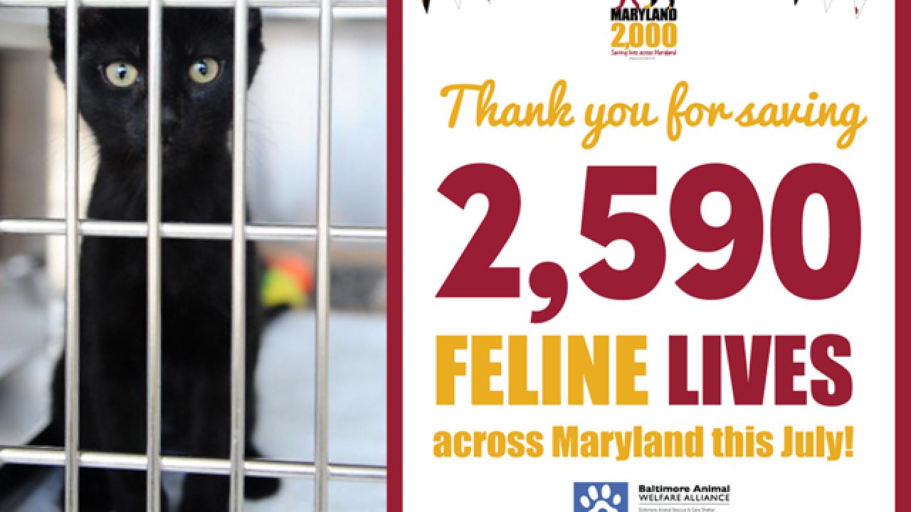 Maryland cat adoption program exceeds goals