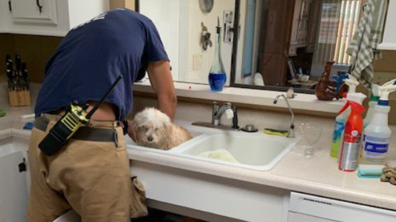 Firefighters Free Orcutt Pup Stuck In Sink