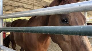 Horses4Heroes