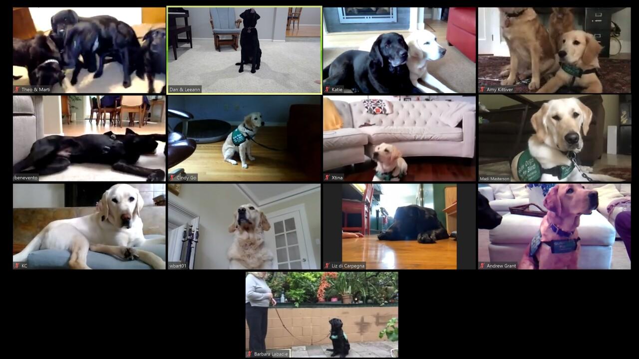 Zoom San Rafael Puppy Club Meeting.jpg