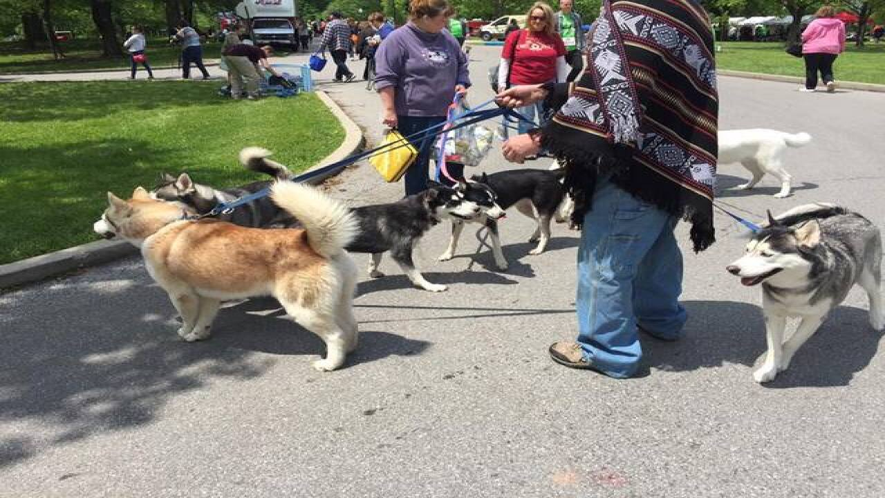 PHOTOS: Indy Humane Mutt Strut