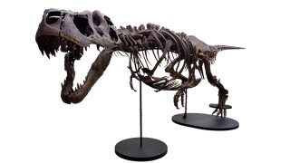 The largest touring fossilized skull of the T. Rex in the world makes inaugural stop in Phoenix