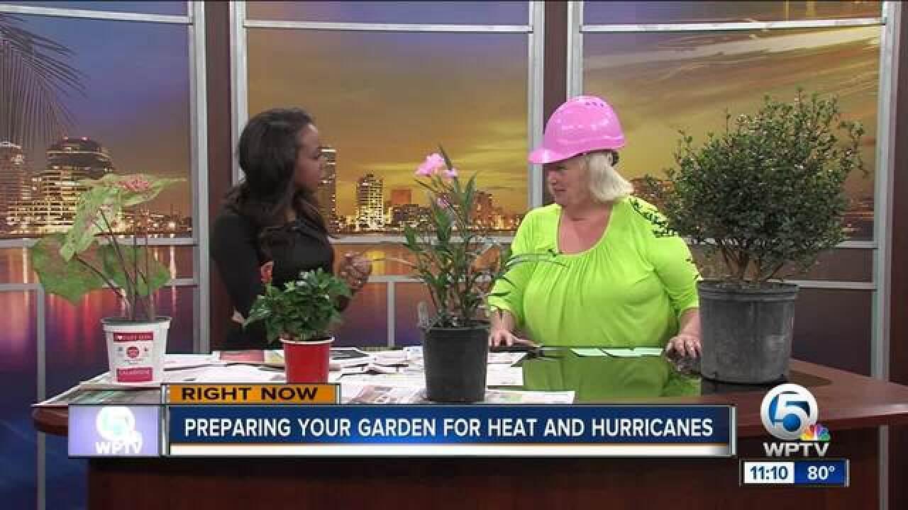 Prepare your garden for heat, hurricanes
