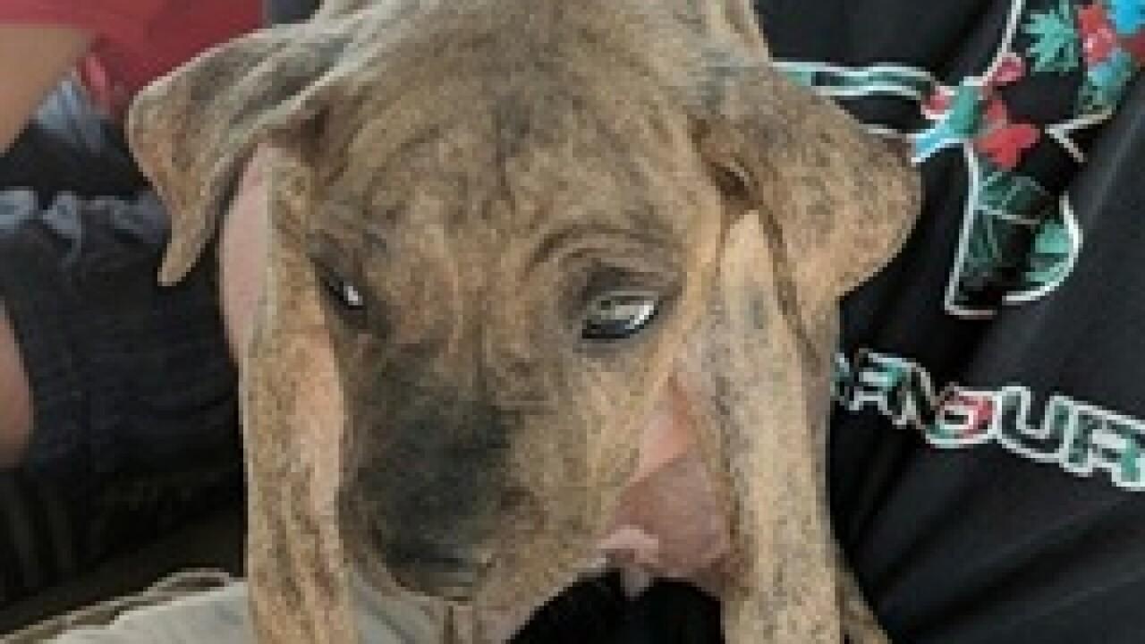 10-week old puppy stolen at Arizona PetSmart