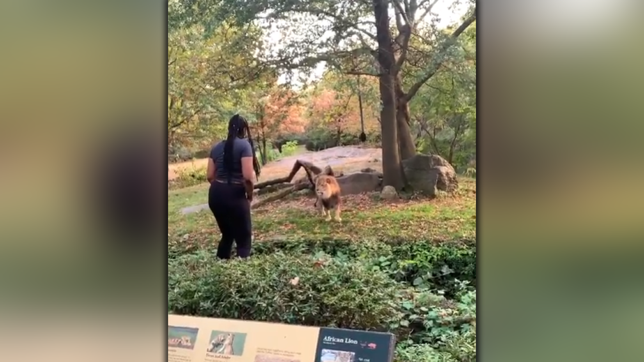 Woman-climbs-inside-lion-exhibit-at-The-Bronx-Zoo.png