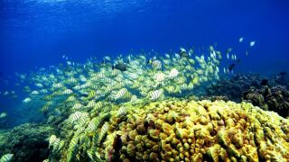 A Florida-based foundation restored over 100,000 corals. The NOAA is giving them $2.5 million to restore more