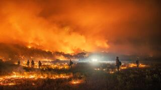 Controlled burns can have positive effects on forests