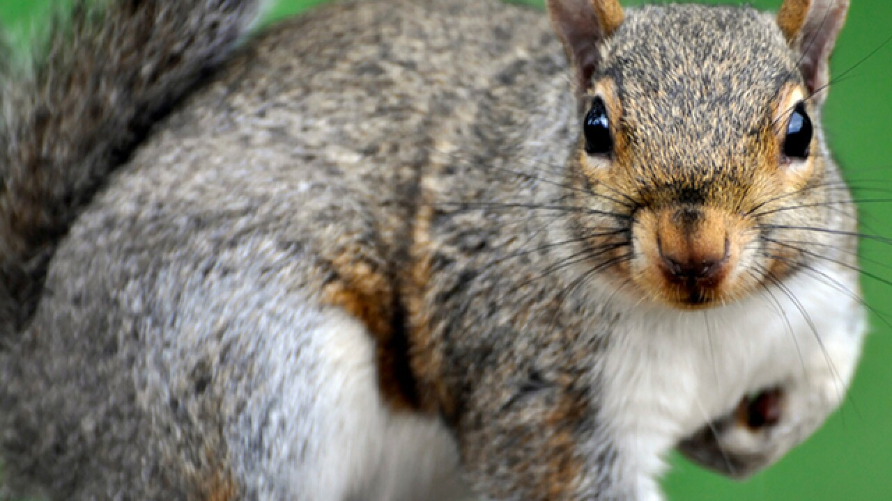 Frontier Airlines flight delayed in Orlando after woman brings squirrel on plane