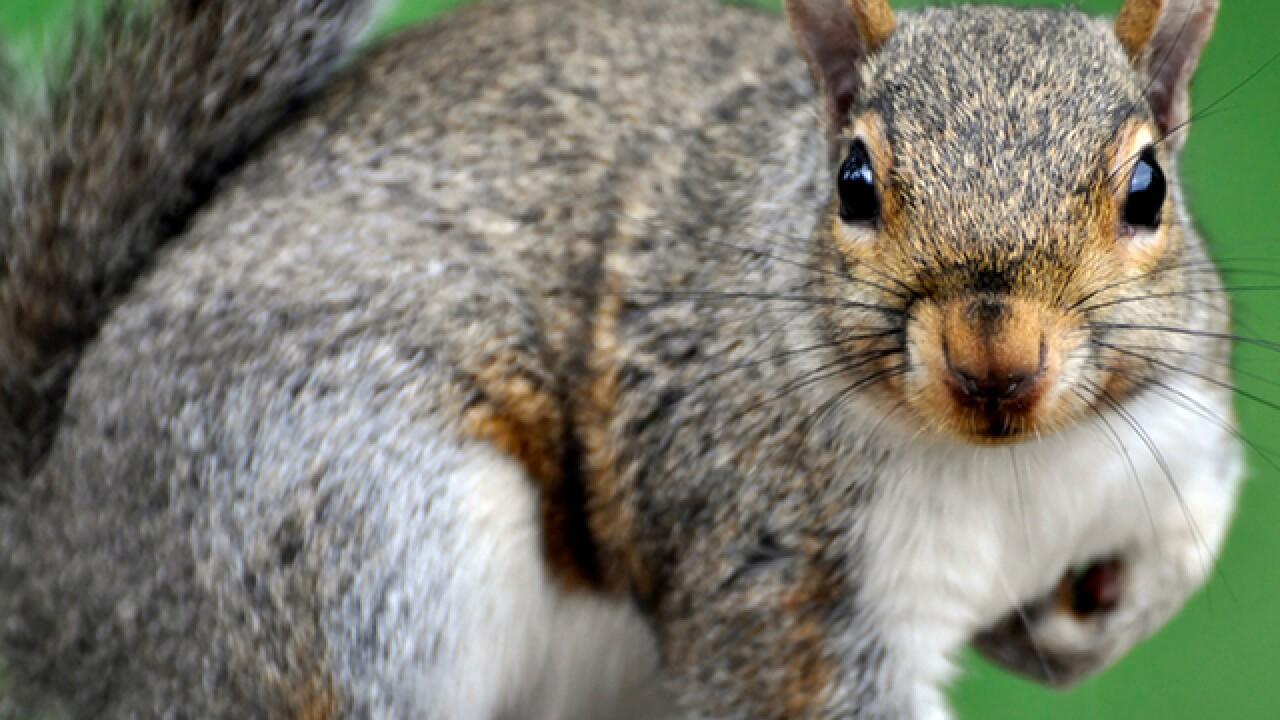 Squirrel attacks at least 3 at Central Florida senior center