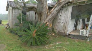 ARDNAUVILLE TREE 2.jpg