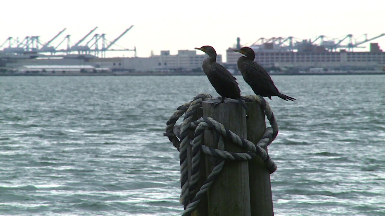 Advocacy groups concerned HRBT expansion is threatening massive bird nestingsite