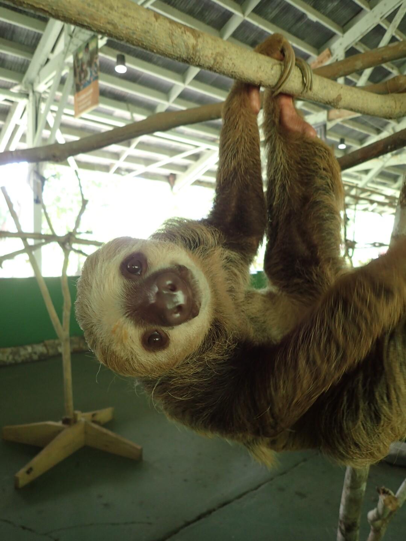 Baby Sloths (15).JPG