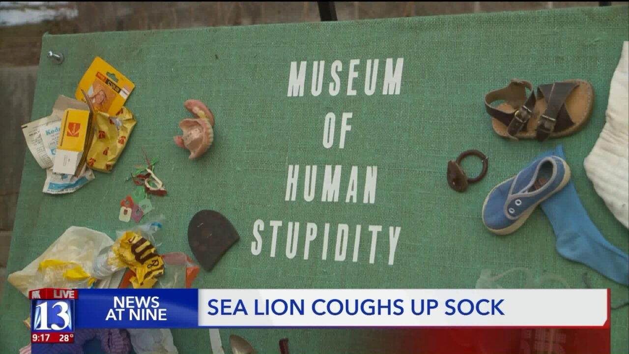 Sea lion swallows, vomits toddler's sock, Hogle Zoo cautions visitors