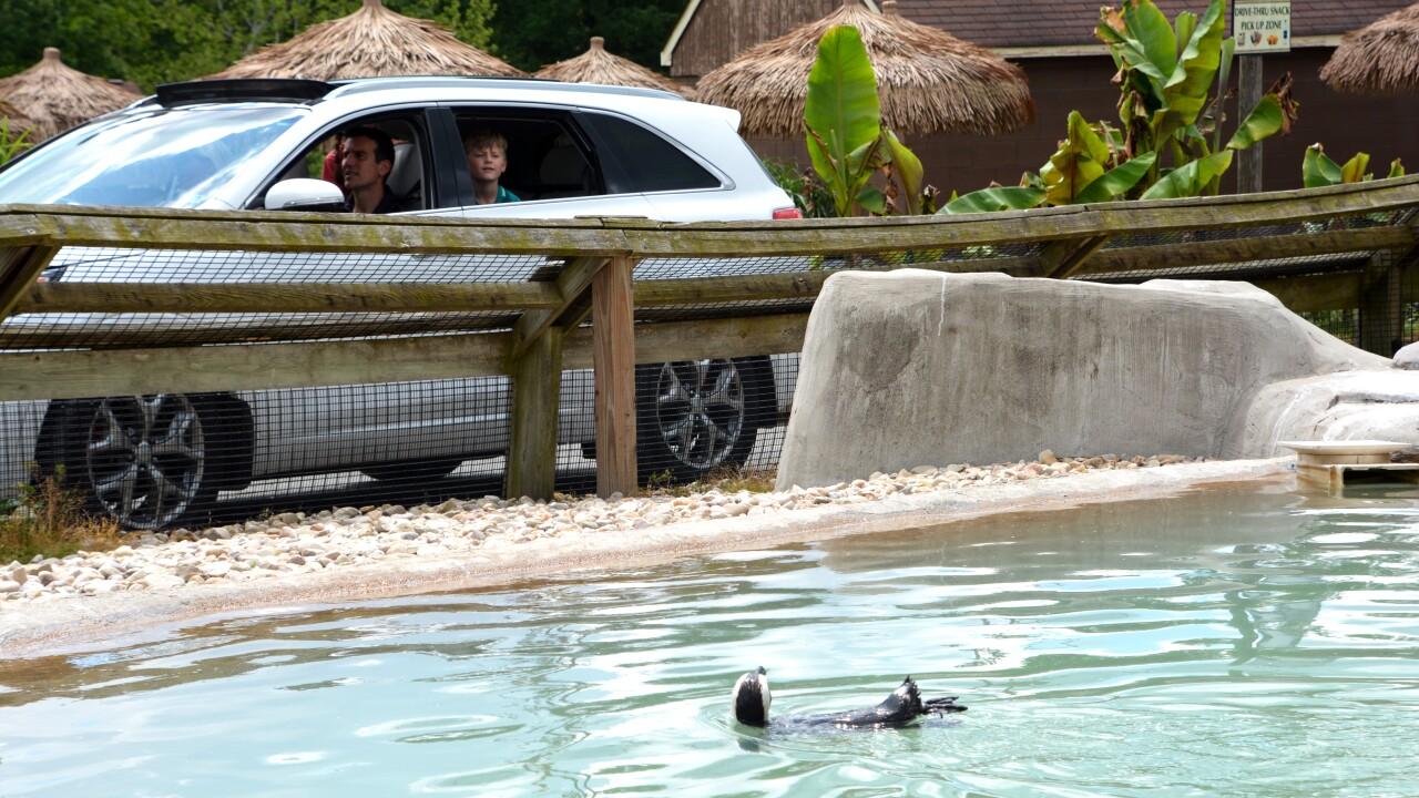 drive-thru penguin.jpg