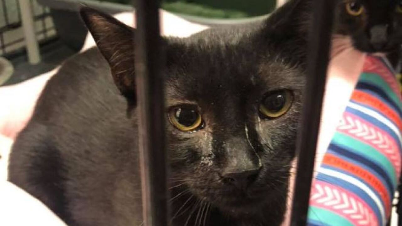 Humane Society seizes dozens of cats as part of neglect