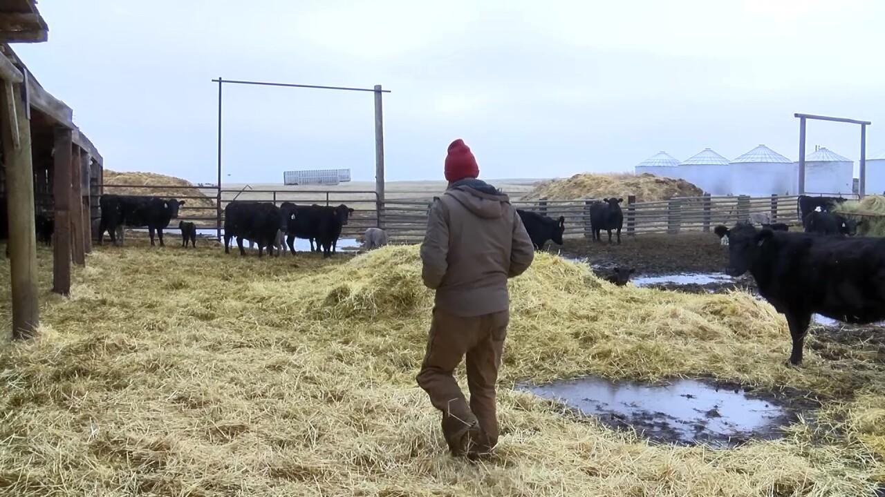 Haymaker Beef in Ledger