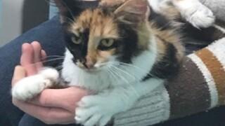 Free pet adoptions throughout December at Johnson County Animal Shelter