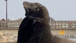 Sea lion spotted with fishing net around neck in Oceanside Harbor