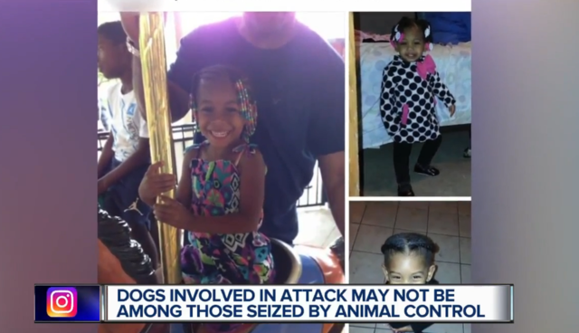 Dogs Attack Girl, 5, in Detroit