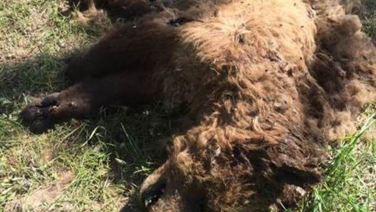 $21,200 reward after killing of grizzly found in E. Idaho