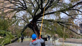 OKC Memorial Survivor Tree.PNG