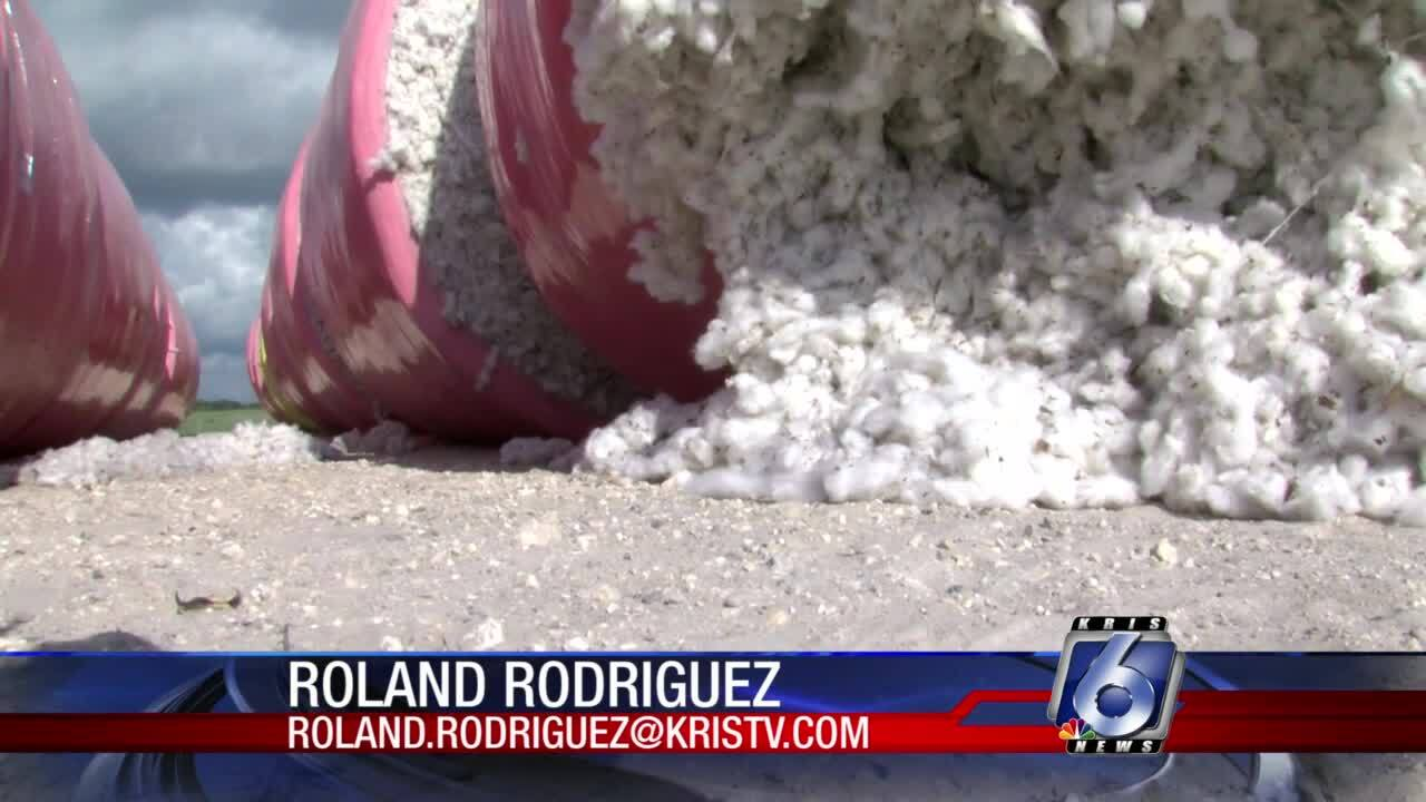 Local farmers grappling with plastic in their cotton