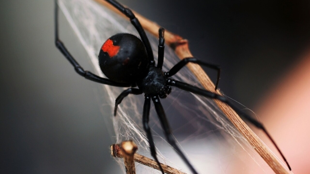Man sets home on fire after using blowtorch to kill spiders