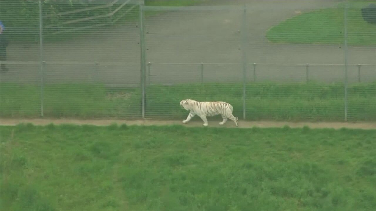 Tiger kills zookeeper in apparent 'freakaccident'