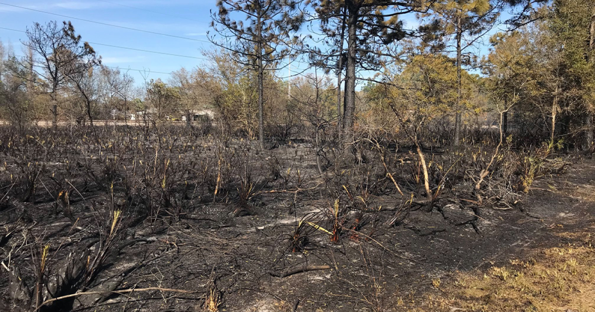 No injuries reported after firefighters extinguish nearly 10-acre brush fire in Hillsborough County