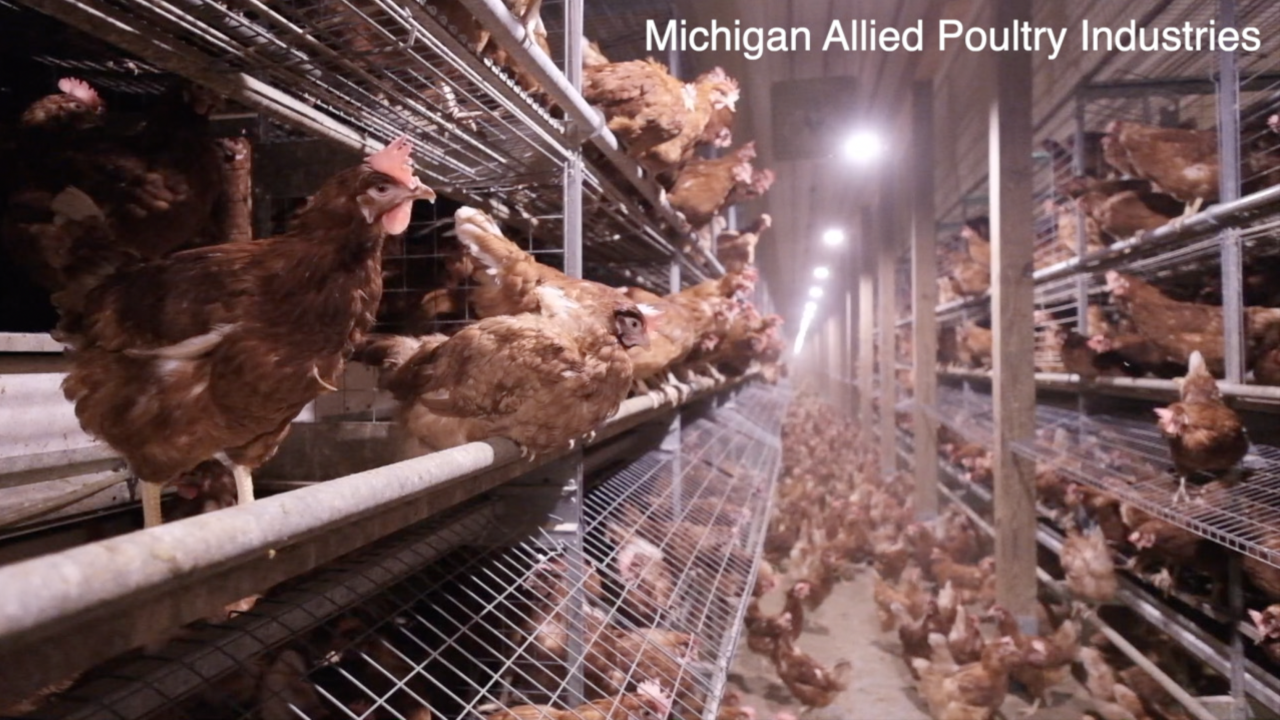 Cage-free environment
