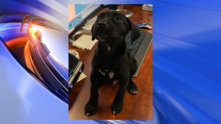Rescued puppy helps ease stress at Virginia 911 center