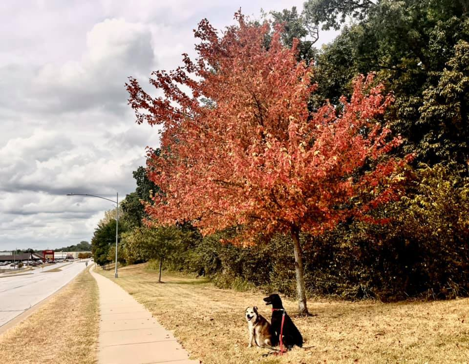 Great Fall Foliage Is Showing Up With Rainbow & Sunny